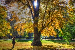 Woman with Balloon Under Autumn Yellow Tree in Riga, Latvia Park
