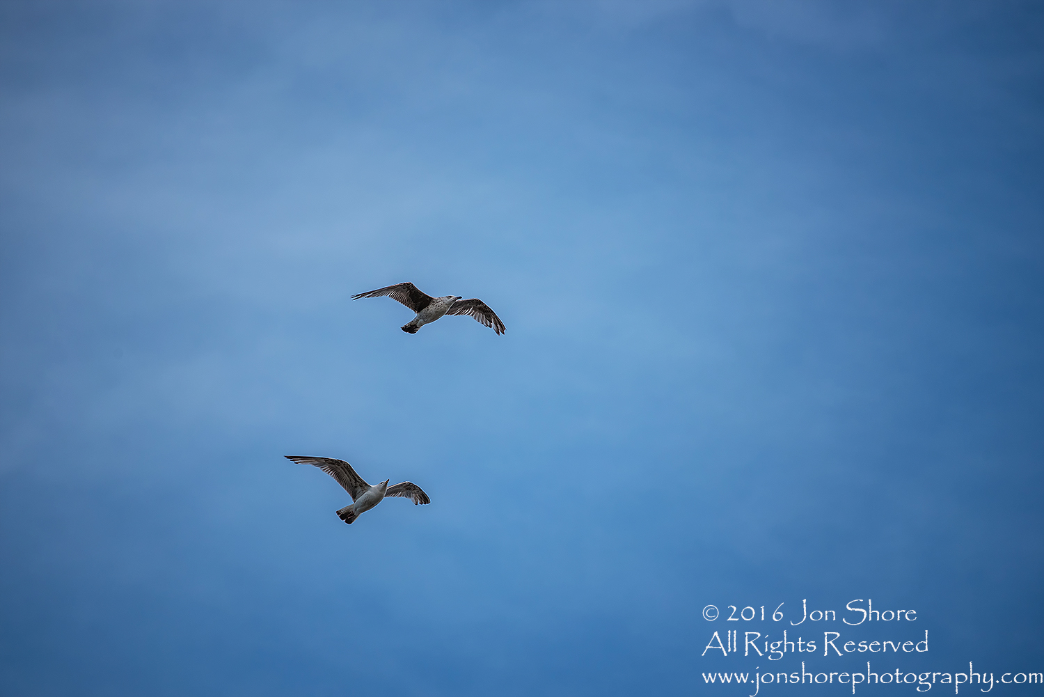 Seagulls in Blue Sky. Tamron 300mm lens