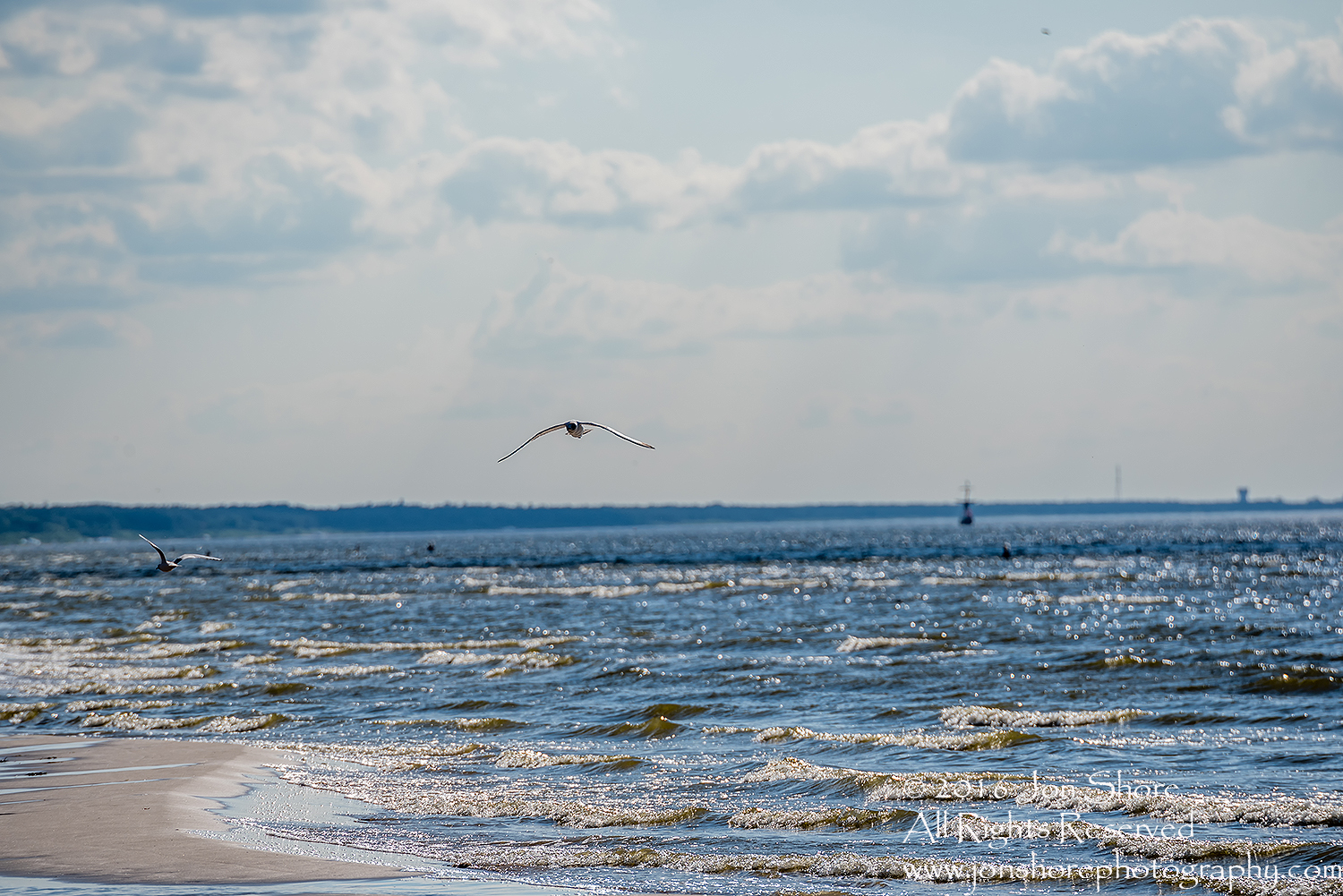 Seagull over the Baltic Sea. Jurmala, Latvia. Tamron 300mm lens