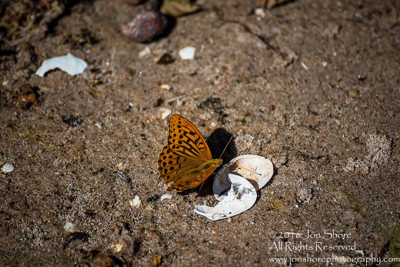 Butterfly on beach Estonia