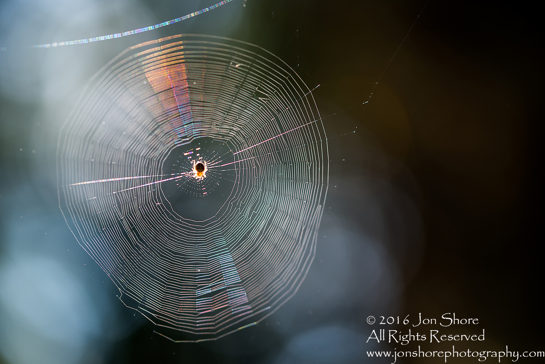 Spider on web macro. Tamron 90mm macro lens