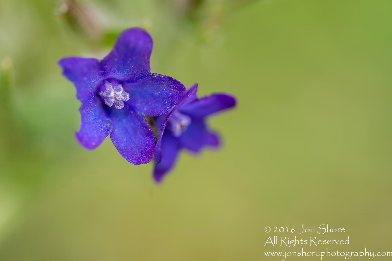 Wildflower macro Estonia