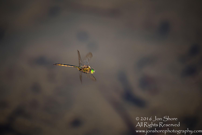 Dragonfly. Tamron 300mm