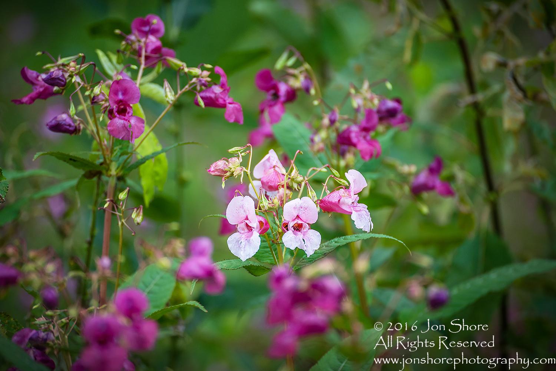 Flowers, Latgale, Latvia. Tamron 300mm