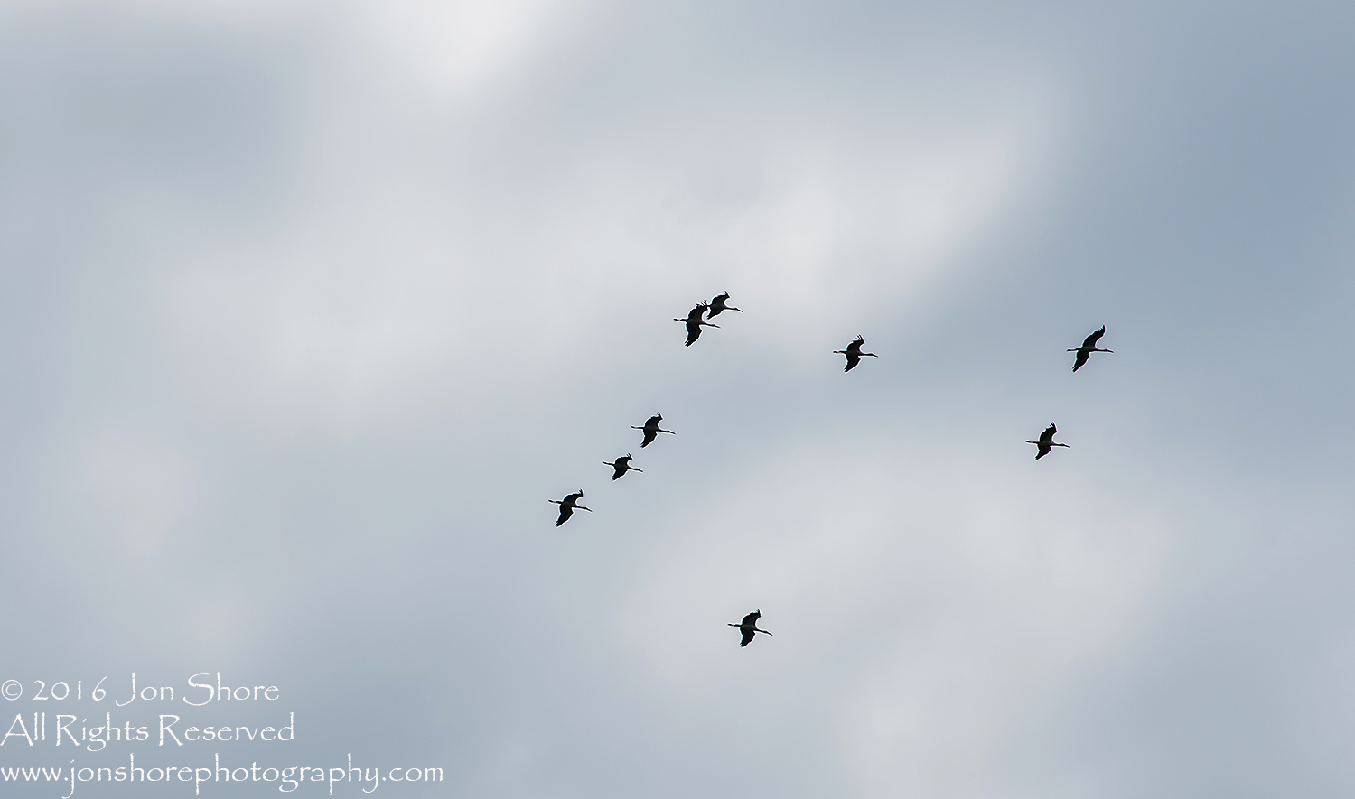 Storks Flying South for their Migration. Tamron 300mm