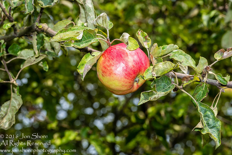 Apple - Summer - Jurmala, Latvia Tamron 200mm Lens