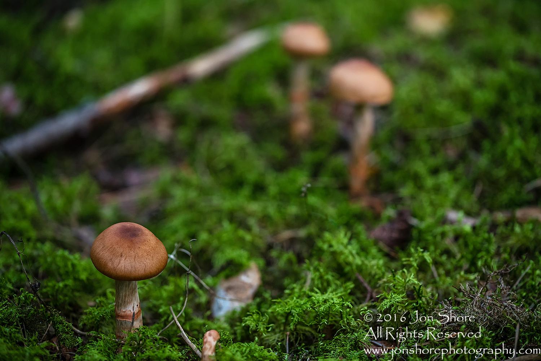 Wild Mushroom Close-up - Latgale, Latvia. Tamron 90mm Macro lens