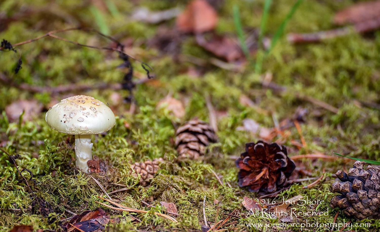 Mushroom Macro Closeup - Tamron 90mm Macro Lens