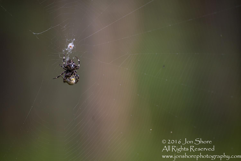 Spider Close-up - Latvia Tamron 90mm Macro Lens