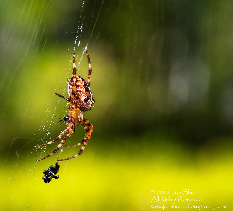 Spider with dinner macro closeup. Tamron 90mm macro lens