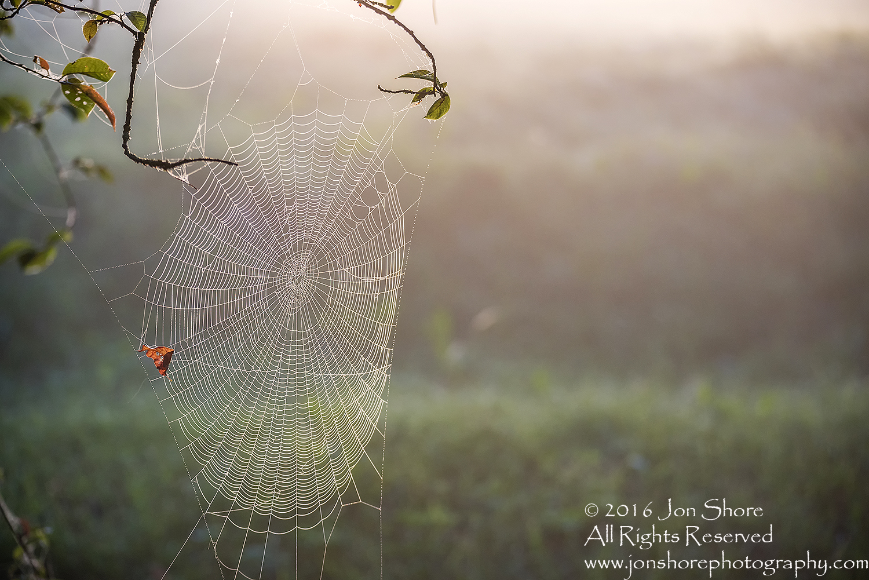 Spiderweb at Dawn - Summer - Burtnieks, Latvia Tamron 200mm Lens