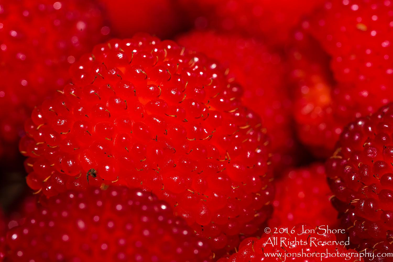 Strasberries - Strawberry Raspberry Hybrid Macro Tamron 90mm Macro Lens