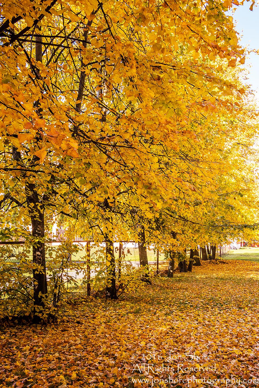 Autumn, Zolitude, Latvia. Nikkor 28mm