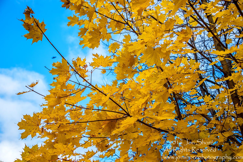 Autumn Leaves, Zolitude, Latvia. Nikkor 200mm