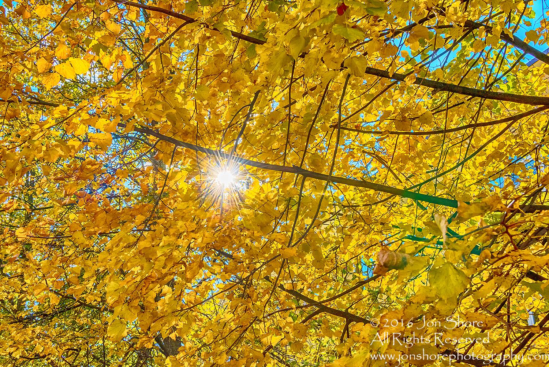 Autumn Leaves Lens Flare. Nikkor 300mm