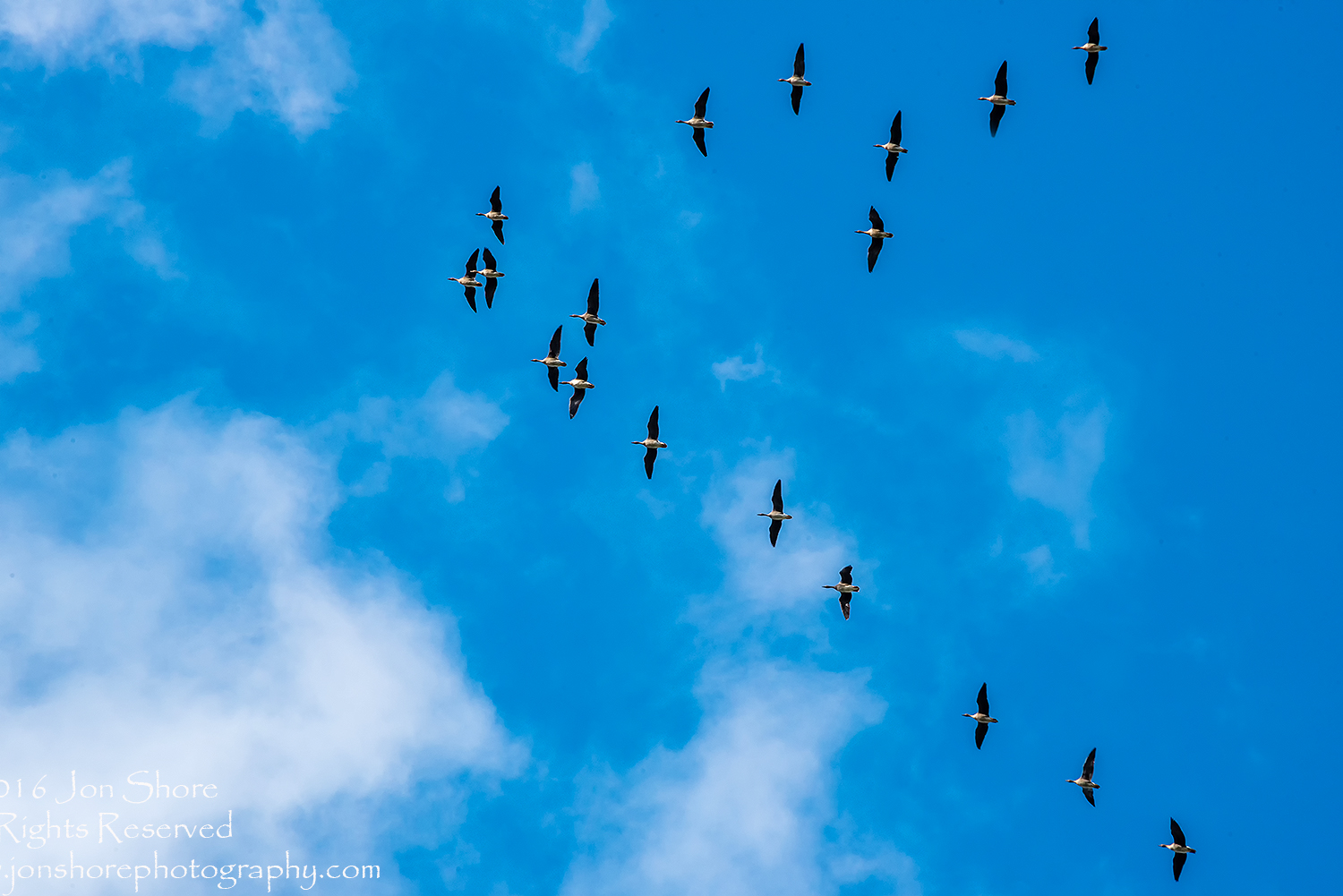 Geese Heading South. Latvia. Nikkor 300mm