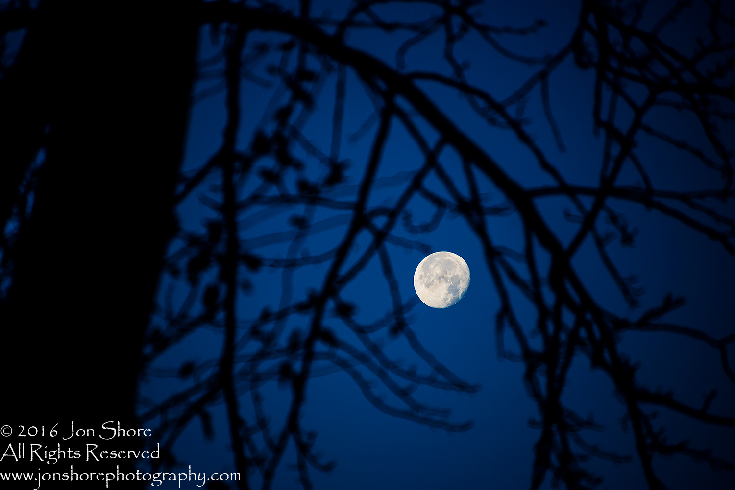 Moon and Tree. Nikkor 300mm