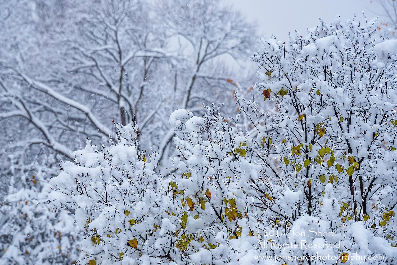 Snowy tree, Latvia. Nikkor 300mm
