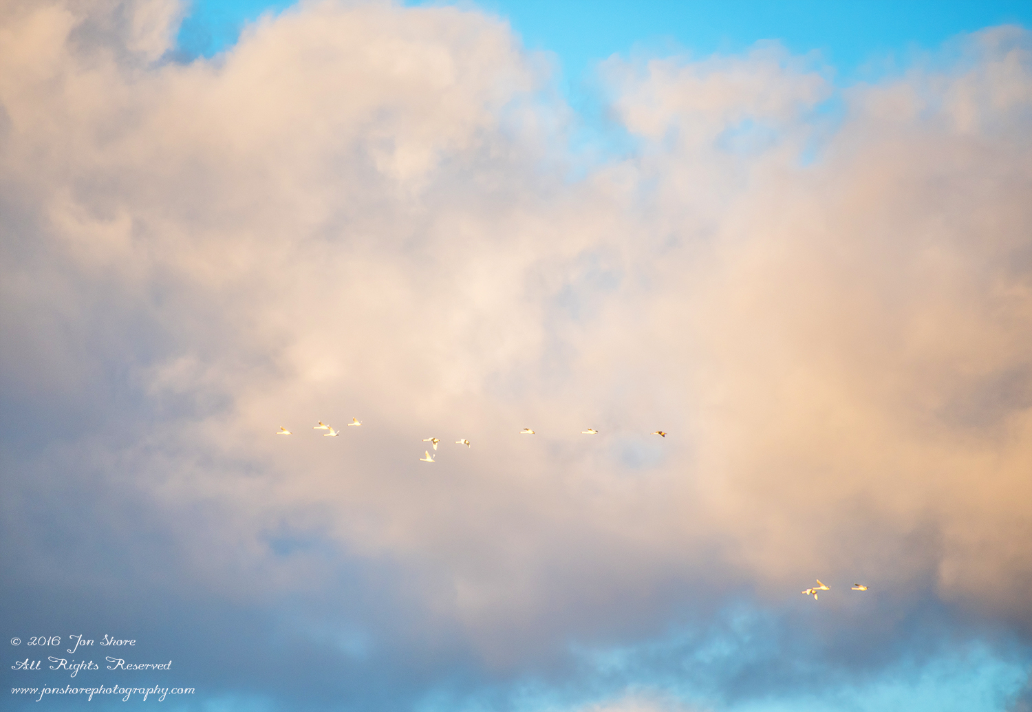 Swans flying in a stormy cloudscape. Nikkor 300mm