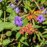 Flowers Gran Canaria 2017 by Jon Shore 150dpi-8438