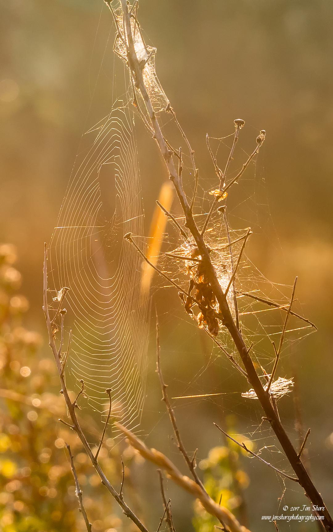 Spider web Vasto Italy September 2017