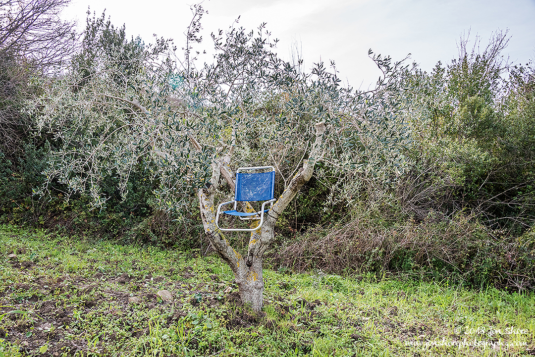 Chair in Olive Tree Agropoli Italy March 2018