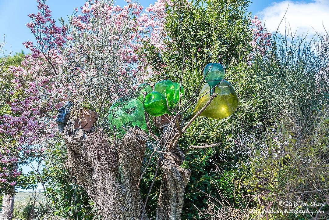 Bottle tree Eboli Italy March 2018