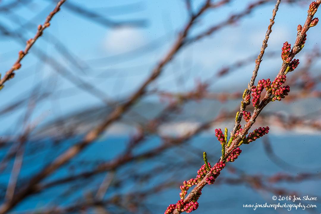 Spring buds Macro San Marco di Castellabate Cilento Italy March 2018