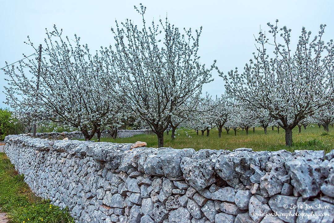 Alberobello Spring Pugliia Italy