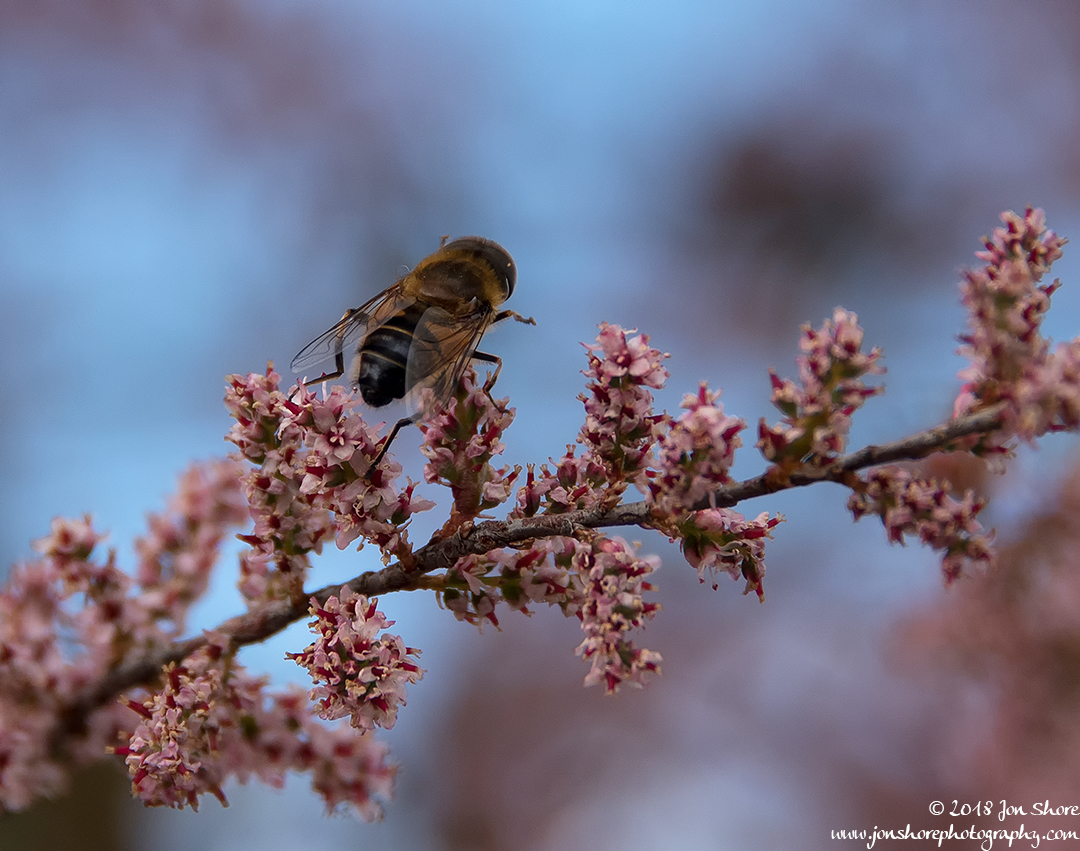 Bee Macro Spring at San Marco di Castellabate Italy