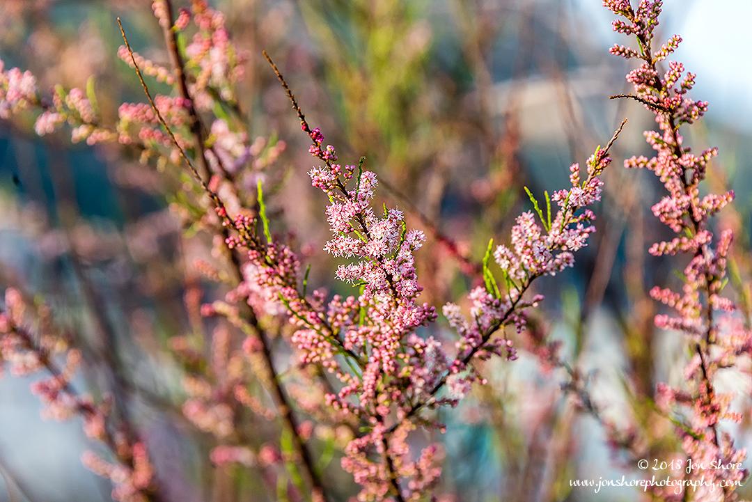 Blossoms San Marco di Castellabate Cilento Italy