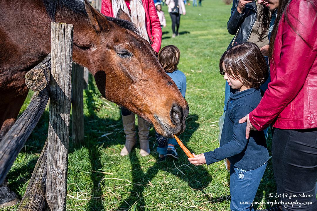 Horse Spring Il Granato Italy