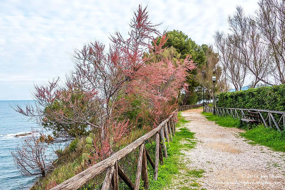 Spring San Marco di Castellabate Cilento Italy