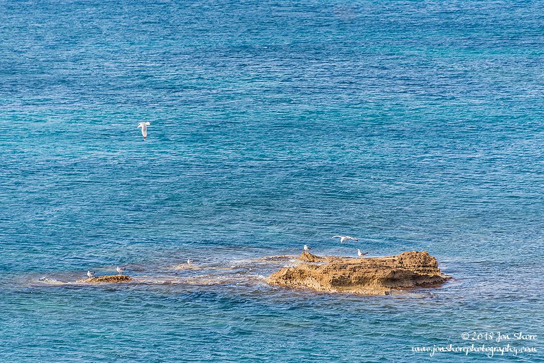 Seagulls Spring at San Marco di Castellabate Italy