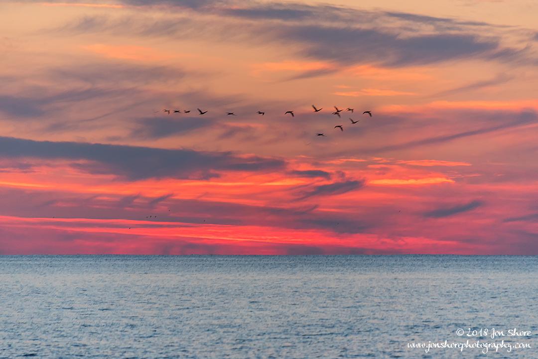Sunset birds San Marco di Castellabate Cilento Italy