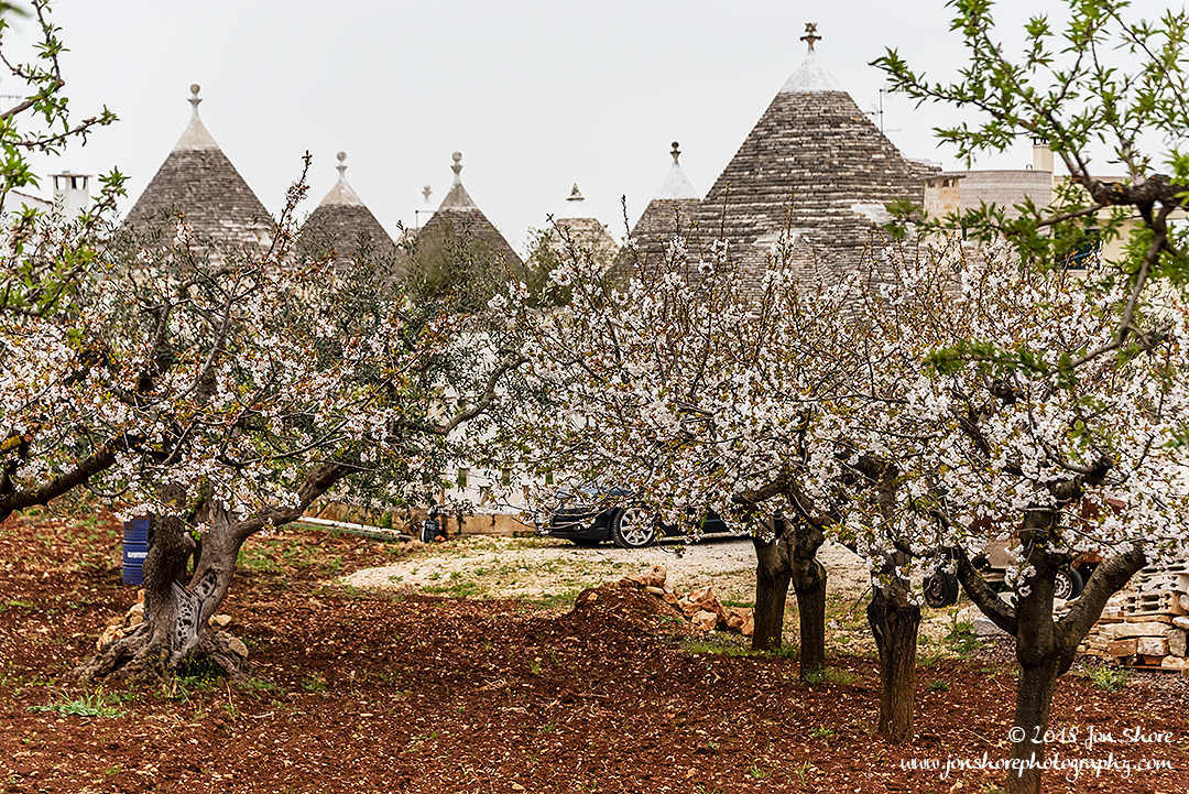 Alberobello Trulli and Cherry Trees Spring Pugliia Italy