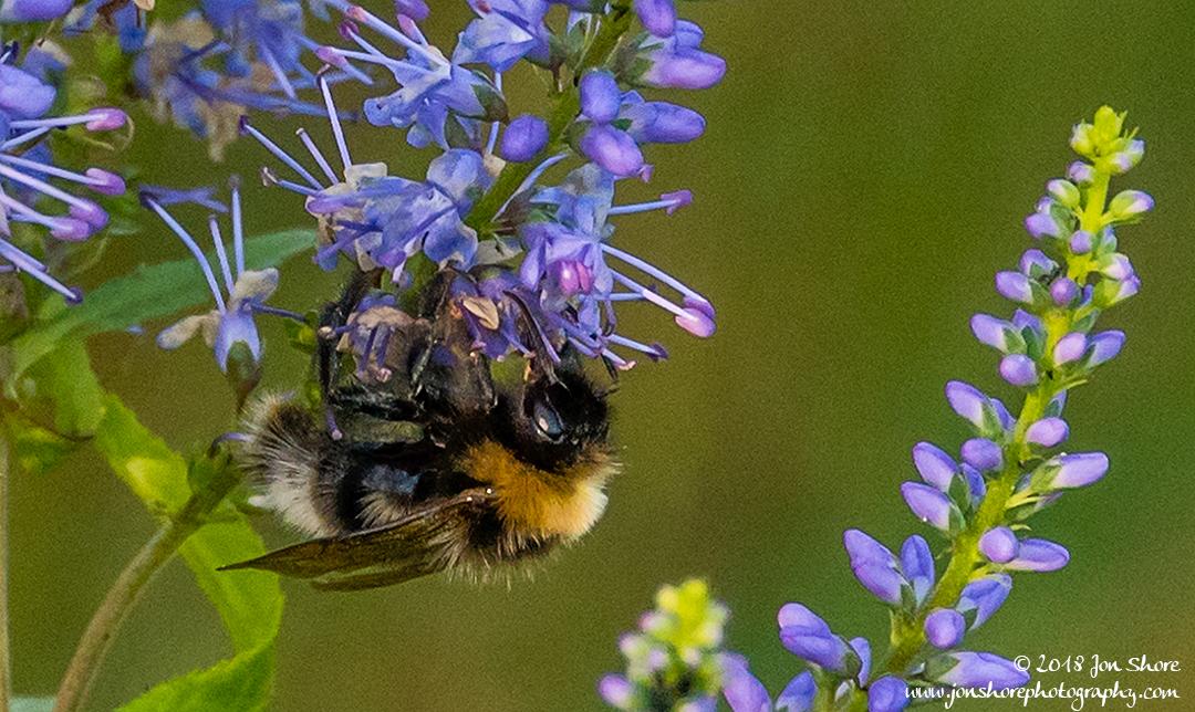 Bee Latvia July