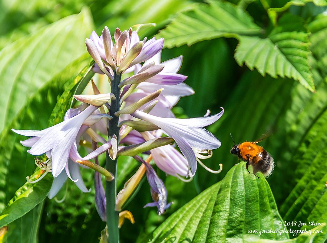 Bee Riga Latvia July 2018
