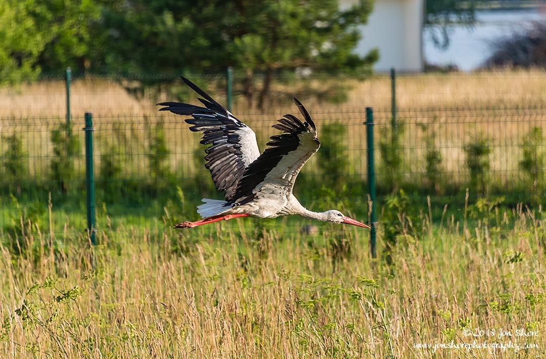 Stork Latvia June 2018