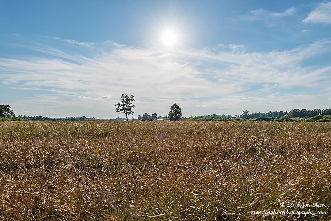 Wheat Latvia July 2018