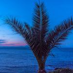 Night Palm San Marco di Castellabate Italy Jon Shore January 2019 72dpi-4674