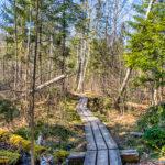 Forest Path Spring Latvia by Jon Shore April 2020 72dpi-9792