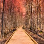 Forest Path Spring Sunset Latvia by Jon Shore April 2020 72dpi-9716