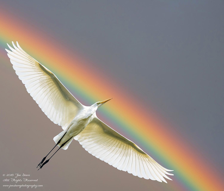Egret and Rainbow