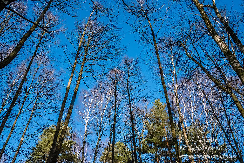 Trees in Latvian Winter. Nikkor 28mm