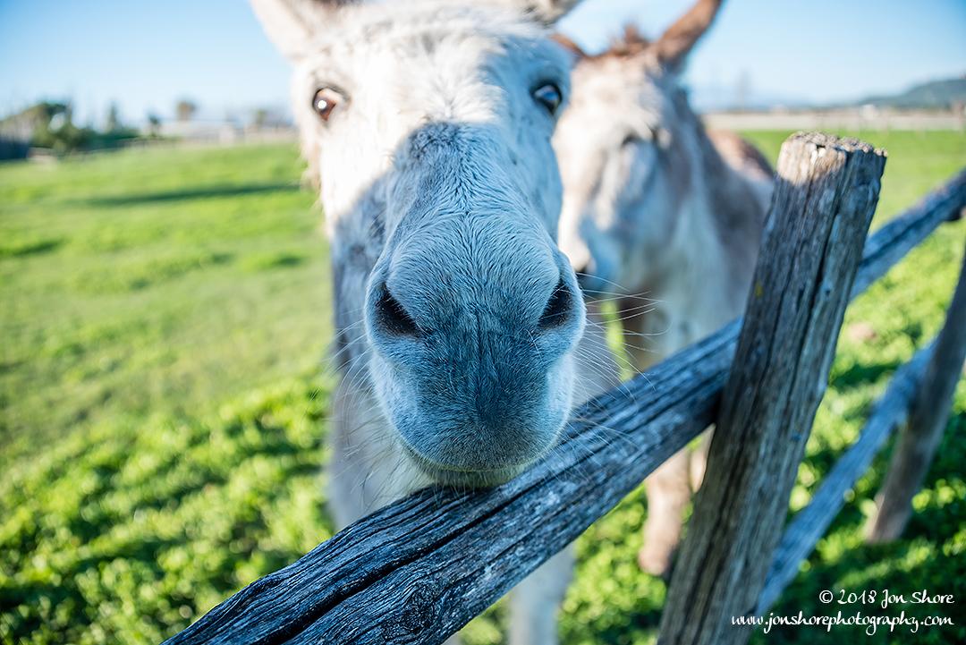 Donkey Italy March 2018
