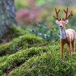 Toy Deer Latvia Summer September 2019 72dpi-3192