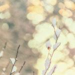 Y First Snow Autumn Latvia October 2019 72dpi-5954