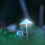 Glowing Blue White Mushroom Kemeri Latvia by Jon Shore October 2021 72dpi-2021