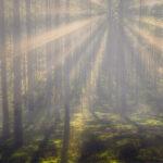 Sunset Sunrays Foggy Forest Engure Latvia Summer by Jon Shore August 2021 72dpi-6806